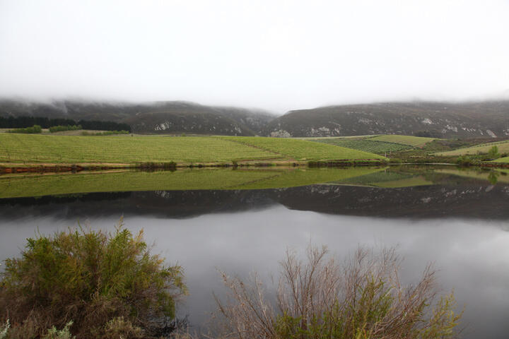 A reflection of a cool climate vineyard in South Africa.