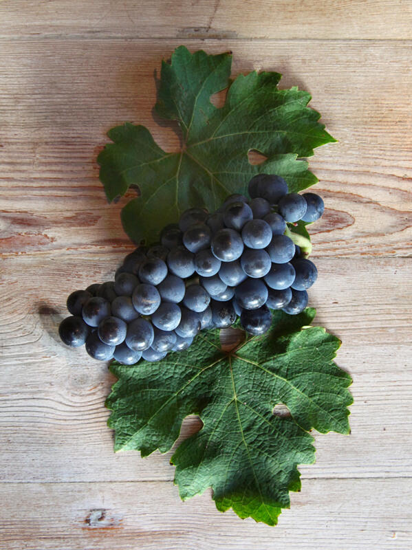 Higher polyphenols or tannins found in the thicker skins, stems and pips of Cabernet Sauvignon, produce more age worthy wines as they are also a natural antioxidant.