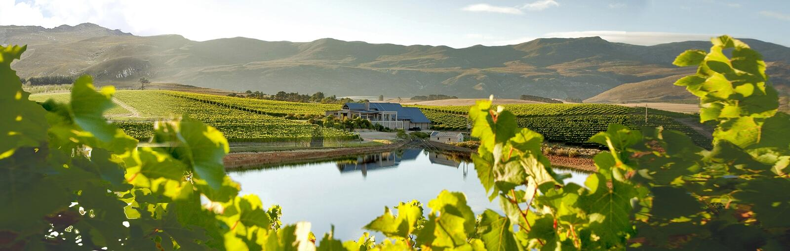 A sunny view of the Creation main building from the vinyards across a dam.